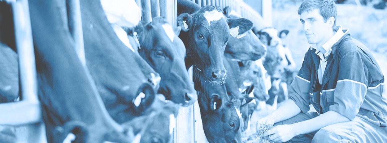 boer-met-koeien_1